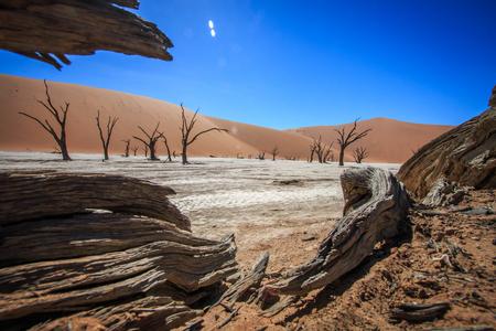 ナミビアのソーサス フライの枯れ木。