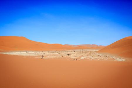 vlei: Dead trees in a salt pan in the Deadvlei, Sossusvlei, Namibia.