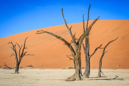 Dead trees in a salt pan in the Deadvlei, Sossusvlei, Namibia.