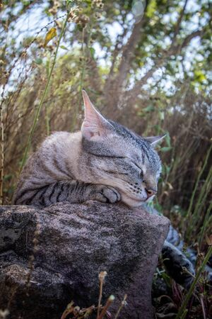 Cat sleeping on a rock in the grass in Africa. Stock Photo