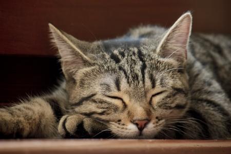Dolcissimo gatto striato che dorme