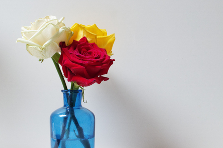 Three roses (red, white and yellow) on white background.