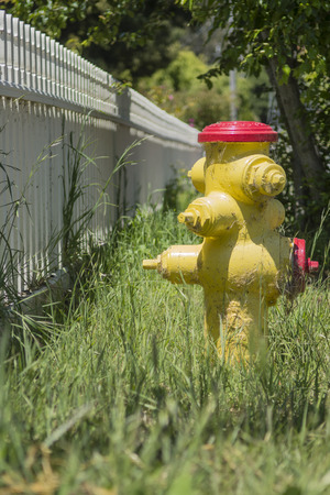 Yellow Fire Hydrant is standing next to a white picket fence in green grass