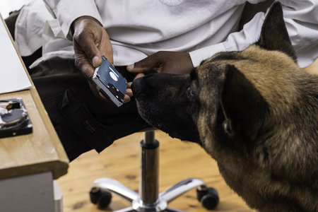 Head of a German Shepherd Dog is sniffing a computer hardrive