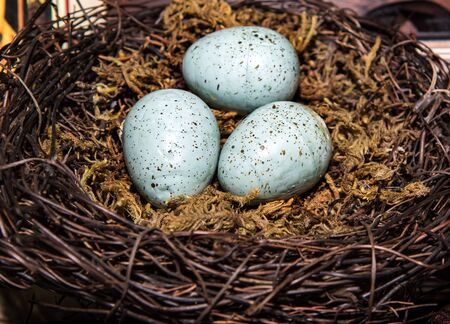 Eggs in Birds Nest in decorative white dish.  Three Green Easter Eggs with rustic look. Stock Photo