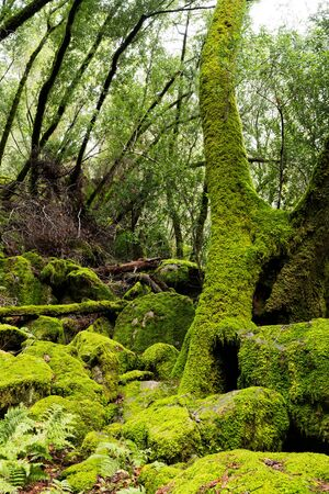 Mossy tree and stones at Sugarloaf Ridge State Park, Sonoma County, California