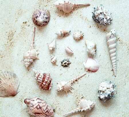 Sea Shells arranged in circle in sand.  Top View.  Summer and Vacation Concept