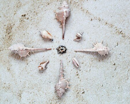 White Sea Shells arranged as star in sand. Top View. Summer and Vacation Concept.
