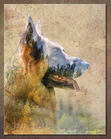 German Shepherd Dog outdoor portrait sitting in grass with blended mountain range .  Nature Art