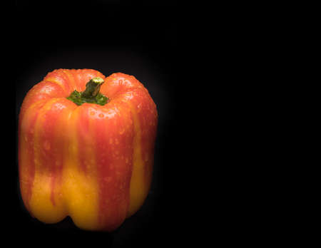 Variegated pepper red and yellow with water droplets on black background. Health Concept with copy space