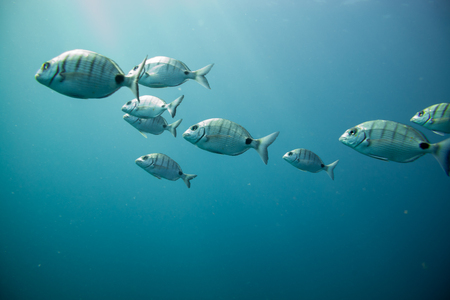 group of fishes swimming, fuerteventura canary islands