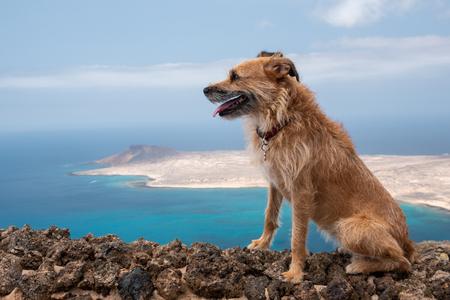 dog on the cliff of the mirador del rio, lanzarote