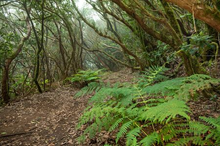 The path of the enchanted forest, tenerife island