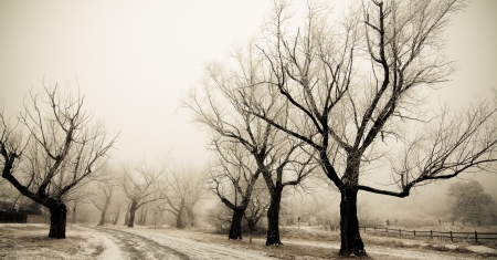 palmer: Path of trees in snow in a very cold and foggy day in Palmer Park Stock Photo