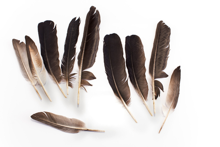 attaque de rapace ? 46118374-plumes-de-pigeon-isolé-sur-blanc-