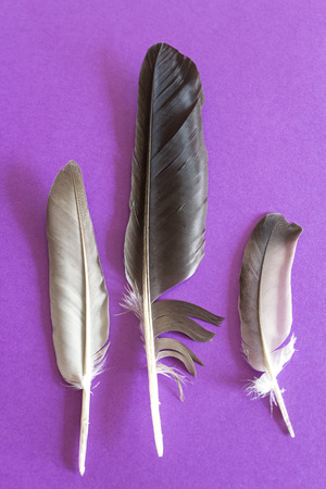 soften: Three dove feathers on a purple background.
