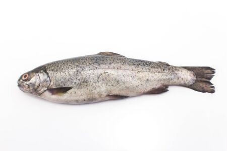 rainbow trout: Rainbow trout isolated on white.