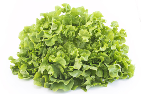 Oak leaf lettuce isolated on white.