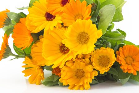 longevity drugs: Marigold, calendula officinalis on a white background.