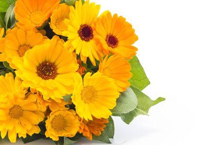 longevity medicine: Marigold, calendula officinalis on a white background.