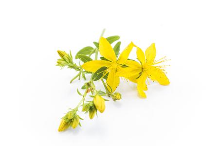 Johanniskraut, natürliches Antibiotikum, Antidepressivum und Anti rheumatischem. Standard-Bild - 58817803