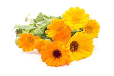 longevity drugs: Marigold, Calendula Officinalis on a White Background. Stock Photo