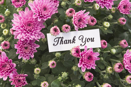 short phrase: Thank You Card with Bouquet of Pink Chrysanthemums.