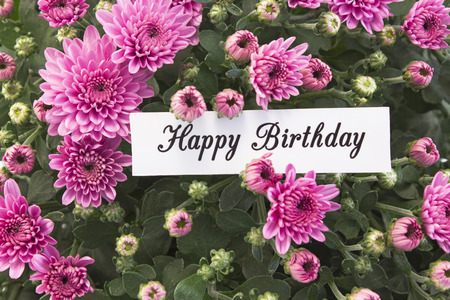 short phrase: Happy Birthday Card with Bouquet of  Pink Chrysanthemums. Stock Photo
