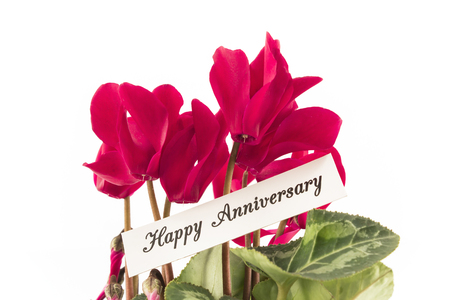 short phrase: Happy Anniversary Card with Bouquet of Cyclamens.