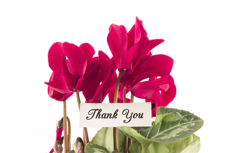 Thank You Card with Bouquet of Cyclamens. Standard-Bild