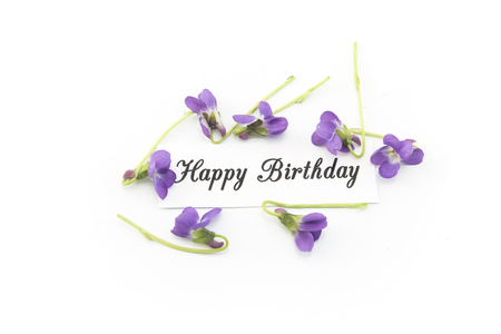 Happy Birthday Card with Violets on White Background.