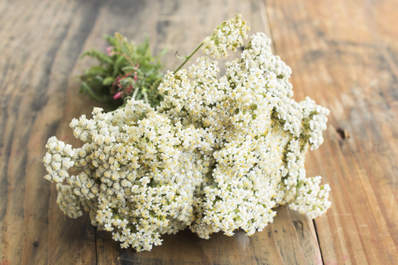 yarrow: Yarrow on a Rustic Wooden Background. Stock Photo