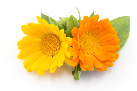 longevity drugs: Marigold, Calendula Officinalis, Isolated on White.