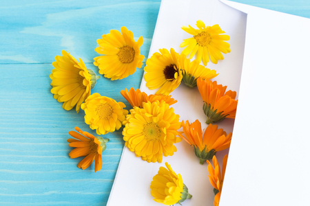 letter c: Marigold in the Envelope for Letter on a Blue Wooden Background. Stock Photo