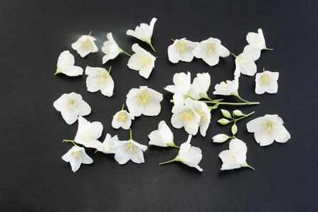 Jasmine Flowers on a Black Background.