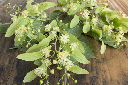 Linden Flowers on a Rustic Wooden Background. Standard-Bild - 101473658