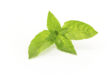Basil leaves isolated on a white background. Standard-Bild - 102685984