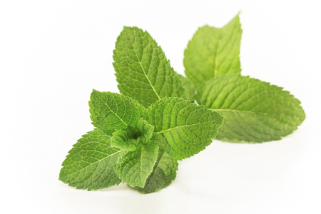 Fresh Mint Isolated on White. Standard-Bild - 106147705