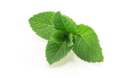 Fresh Mint Isolated on White. Standard-Bild - 106147706