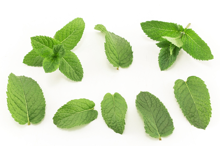 Fresh Mint Isolated on White. Standard-Bild - 106147708