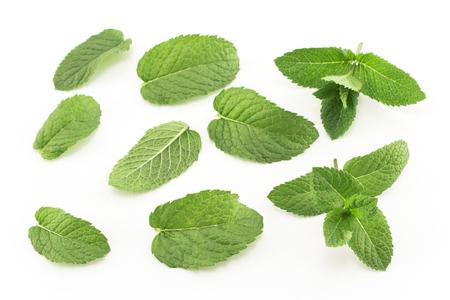 Fresh Mint Isolated on White. Standard-Bild - 106147709