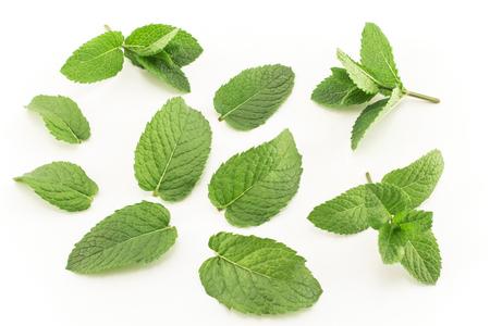 Fresh Mint Isolated on White. Standard-Bild - 106154435