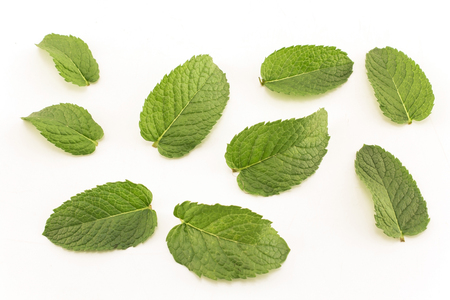 Fresh Mint Isolated on White. Standard-Bild - 106154436