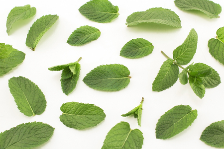 Fresh Mint Isolated on White. Standard-Bild - 106147760