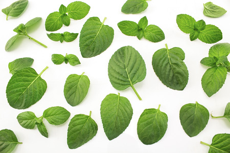 Fresh Mint on White Background. Standard-Bild - 104882330