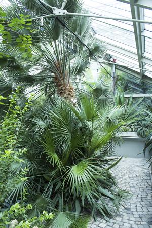 Botanical Garden. Standard-Bild - 104589005