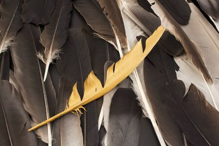 Concept of Individuality, Feathers and Gold Feather.