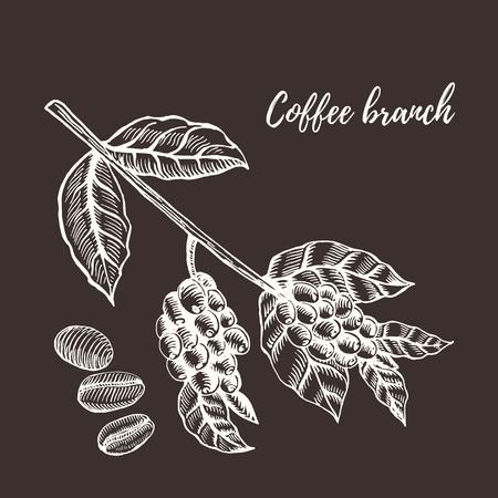 Coffee branch. Coffee branch with coffee leaf and coffee berry. Coffee branch and coffee bean, seed. Organic caffeine. Hand drawn vector illustration coffee. Green coffee, lyuvak