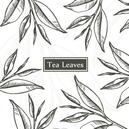 Les feuilles de thé, bio, thé vert, blanc et noir, croquis dessiné modèle de conception main. Vintage floral isolé sur blanc. Vector illustration. Banque d'images - 70773396