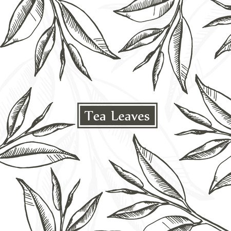 Tea leaves, Organic, green, white and black tea, design template hand drawn sketch. Vintage floral background isolated on white. Vector illustration.